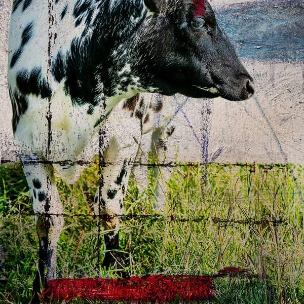 Bilde av Cow 20 x 20 cm Nr 28        -